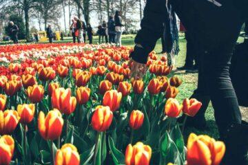 Plus grand parc floral